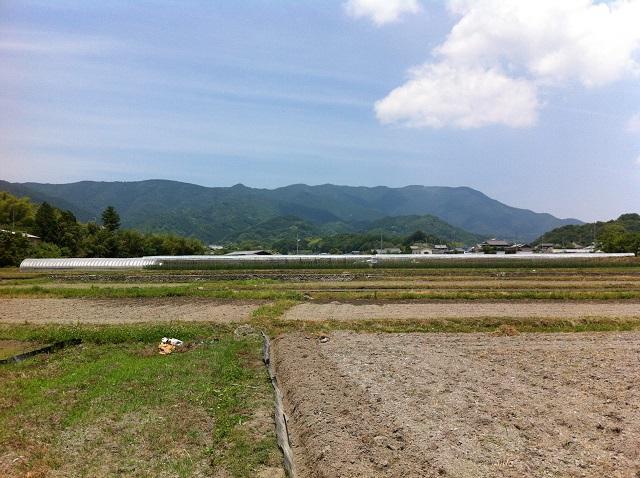 10ひまわり 金剛山 奈良県 バイオマス