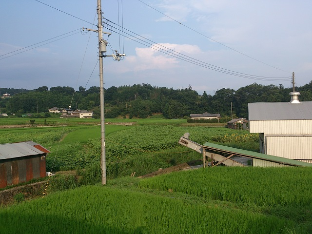 2014 ひまわり畑 和歌山 ロング 迷路