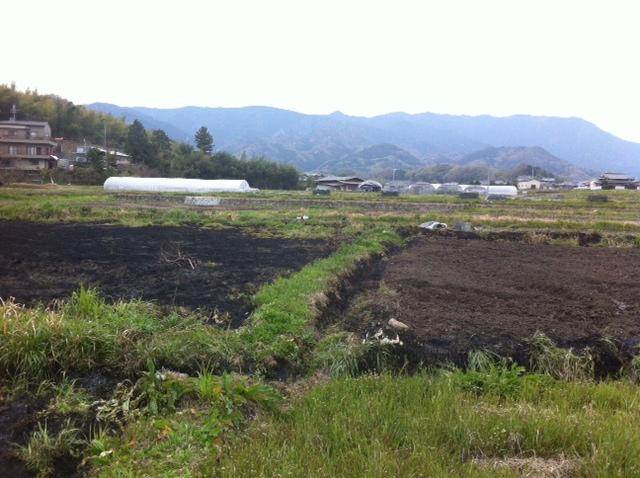 奈良県 ひまわり畑 雑草 野焼き