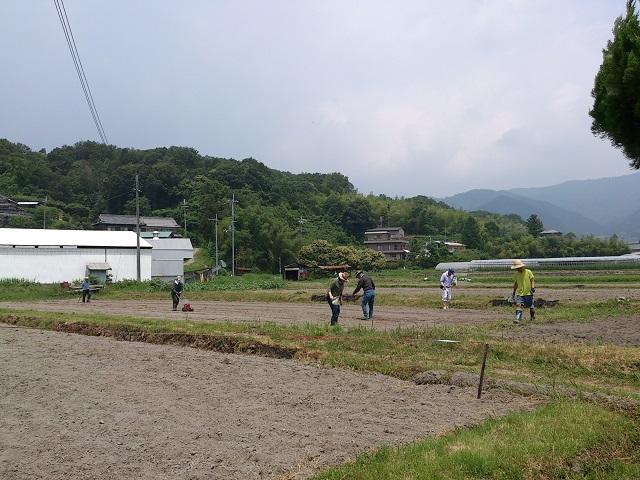 和歌山県 奈良県 ひまわり畑 種まき風景