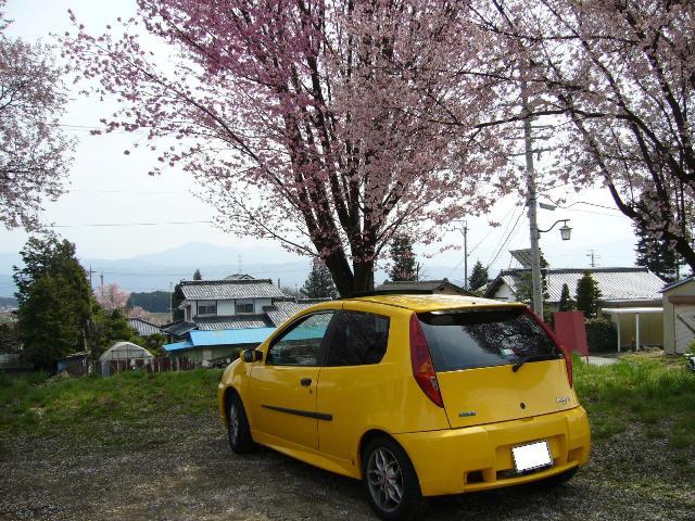 桜とアバルト