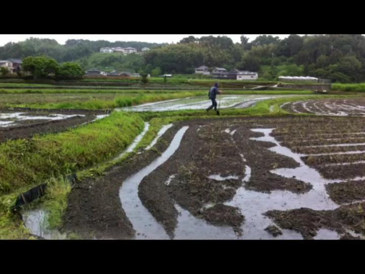 ひまわり畑 台風 溝掘り