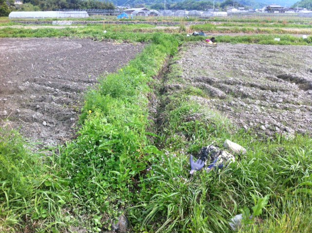 ひまわり畑 梅雨 大雨 水はけ 溝掘り