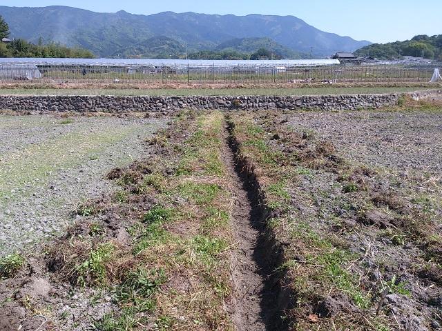 休耕田 ひまわり畑 溝掘り 水はけ