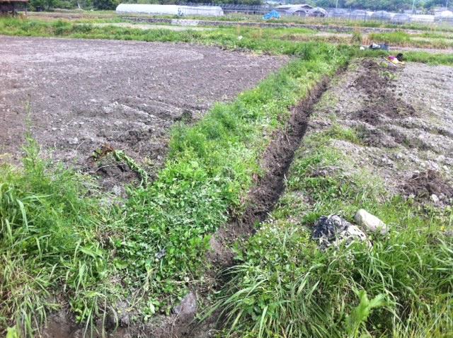 和歌山県 ひまわり畑 梅雨 溝掘り