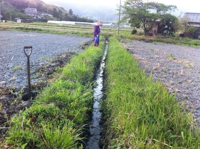 田んぼ水はけ改善 ひまわり 和歌山県 奈良県