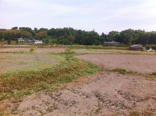 ひまわり畑 草刈り 和歌山県  橋本市