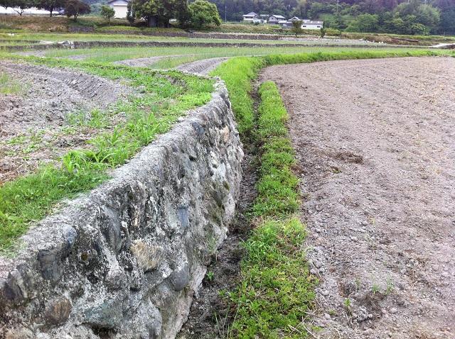 ひまわり畑 台風対策 溝掘り