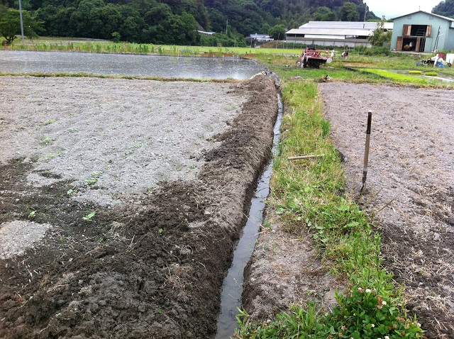 4ひまわり畑 水はけ改善 溝掘り 台風