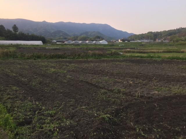 葛城山 夕暮れ ひまわり畑